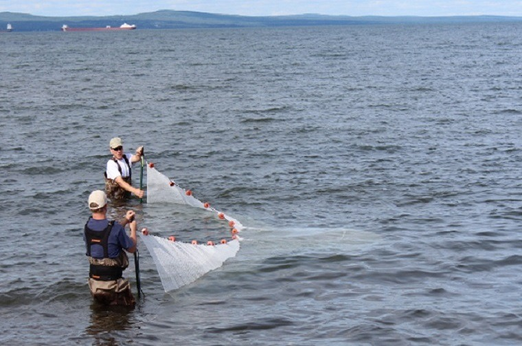 Smelt seine great lakes smelt duluth fish nets an h for Seine net fishing